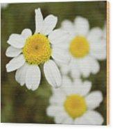 Daisies #1 Wood Print