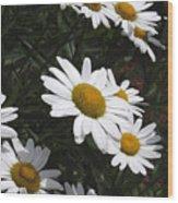 Daisy Day Wood Print