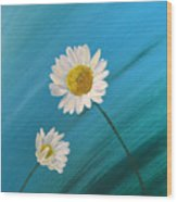 Daisy Duo Wood Print