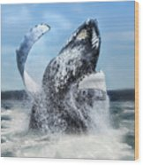 Dances With Whales Wood Print