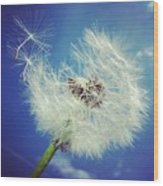Dandelion And Blue Sky Wood Print by Matthias Hauser