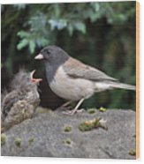 Dark-eyed Junco Mother And Baby Wood Print
