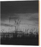 Darkening Wood Print