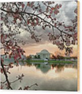 Dc Cherry Blossoms Wood Print