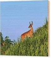 Deer Buck. Wood Print