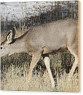 Deer In Bryce Canyon National Park Wood Print