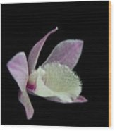 Dendrobium Orchid Wood Print