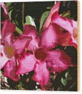 Desert Rose   Adenium Obesum Wood Print