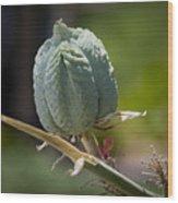 Desert Seed Pod 1 Wood Print