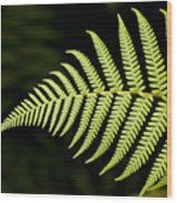 Detail Of Asian Rain Forest Ferns Wood Print