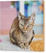 Devon Rex Purebred Domestic Cat Wood Print