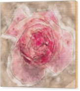 Digitally Manipulated Pink English Rose  Wood Print