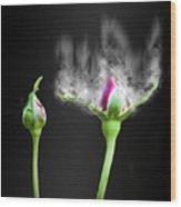 Digitally Manipulated Red Rose Bud Wood Print