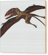 Dimorphodon On White Wood Print