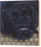 Dog Byte... Wood Print
