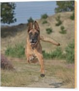 Dog Leaping Wood Print