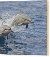 Dolphins Leaping Wood Print by Dave Fleetham - Printscapes