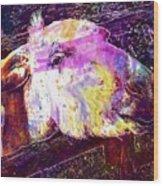 Donkey Livestock Beast Of Burden  Wood Print