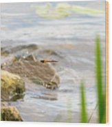 Dragonfly Flying Wood Print