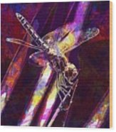Dragonfly Insect Close  Wood Print