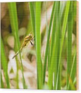Dragonfly On Reed Leaf Wood Print