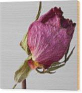 Dried Rose 2 Wood Print