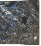 Eagle In Tree Wood Print