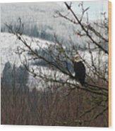 Eagle Watching Wood Print