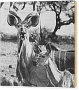 East Africa: Kudu Wood Print