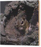 Eastern Chipmunk In Tree Wood Print