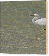 Eastern Great Egret In Florida Wood Print