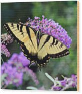 Eastern Tiger Swallowtail Butterfly 2015 Wood Print