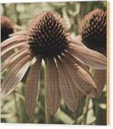 Echinacea Garden Wood Print