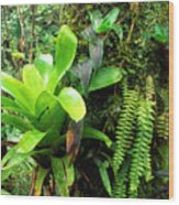 El Yunque National Forest Wood Print