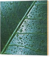 Elephant Ear Leaf Wood Print