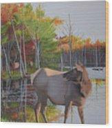 Elk Country Evening Wood Print