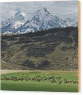 Elk Herd Wood Print