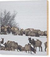 Elk Herd In The Snow Wood Print