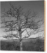 Embrace The Sky Wood Print
