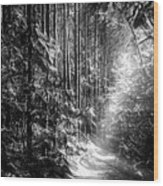 Enchanted Path Wood Print