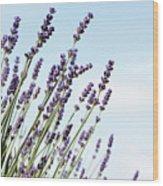 English Lavender Wood Print