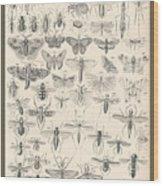 Entomology Wood Print