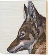 Ethiopian Wolf, Endangered Species Wood Print