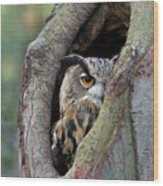 Eurasian Eagle-owl Bubo Bubo Looking Wood Print by Rob Reijnen