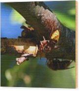 European Hornets Wood Print