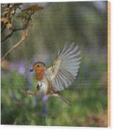 European Robin Alighting Wood Print