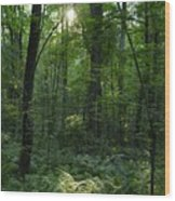 Evening Woods Wood Print