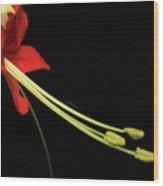 Exotic Flower Wood Print