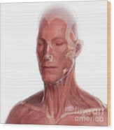Facial Anatomy Wood Print
