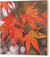 Fall Color Maple Leaves At The Forest In Kochi, Japan Wood Print